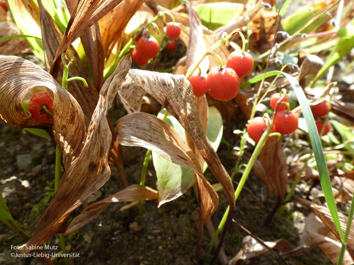 Frucht/September