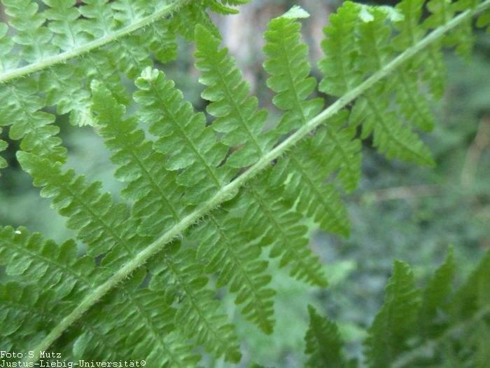 Blattunterseite