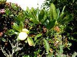 Frucht/Mai