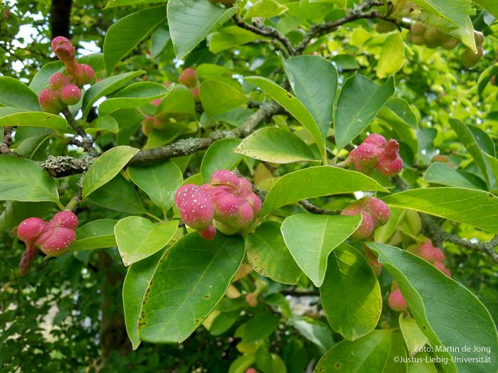 Frucht/August