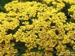 Blüten Nahaufnahme