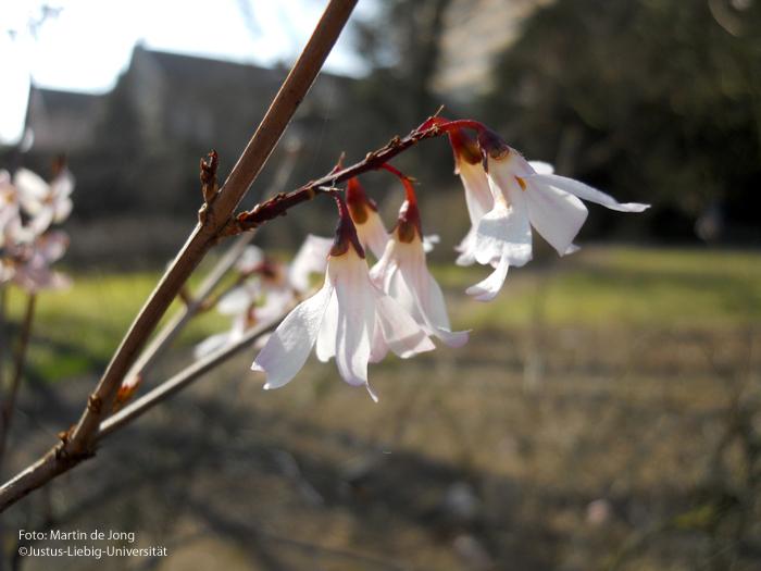 Blütenstand/März
