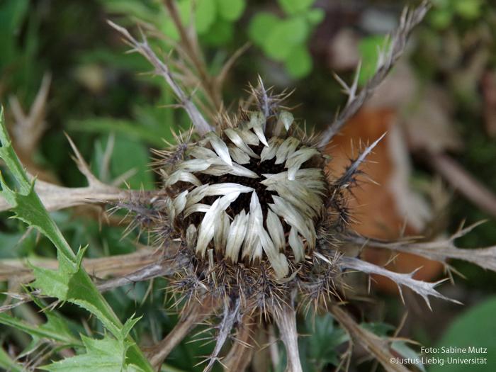 Blüte/September