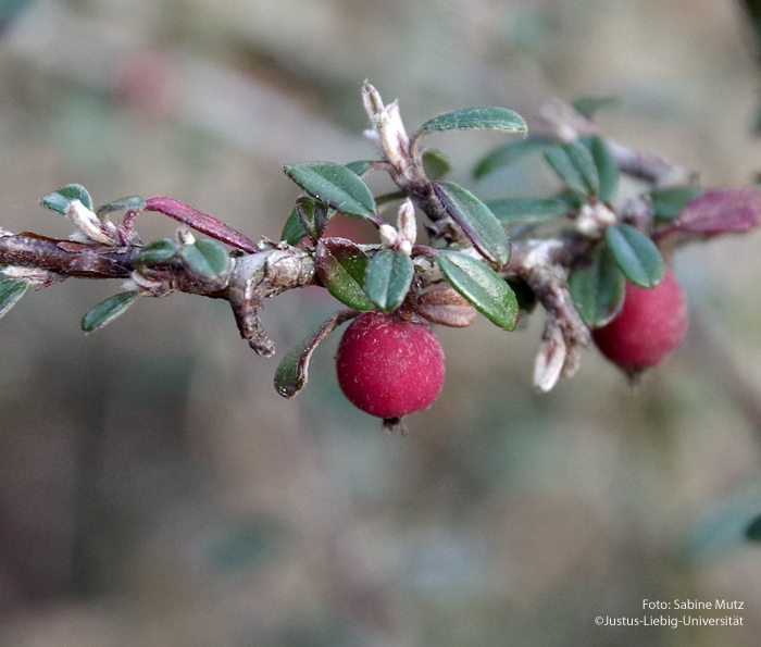 Frucht/März