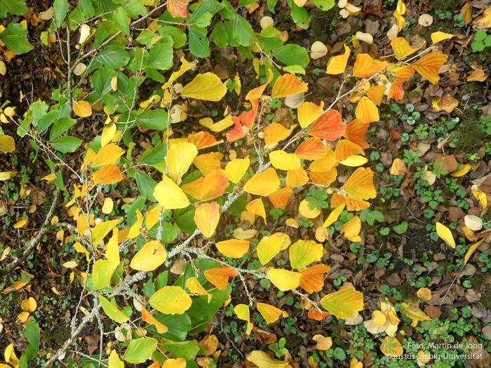 Zweig/Oktober
