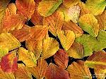 Blattfärbung/Herbst