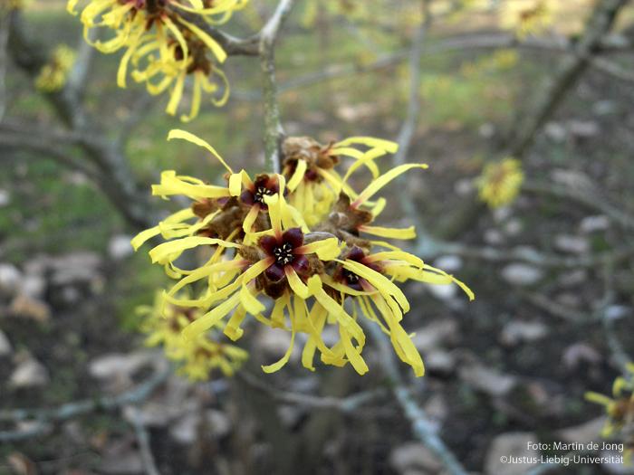 Blüte/Februar