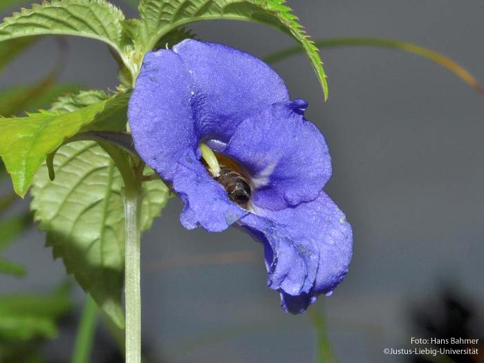 Blüte/August