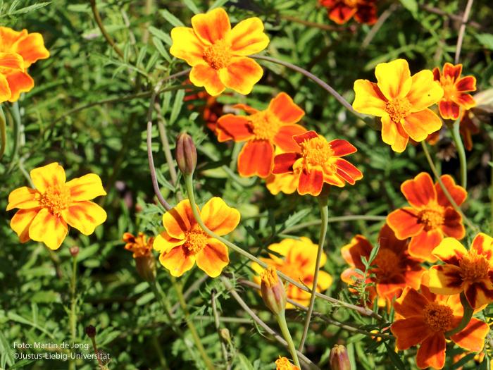 Blüten/September
