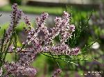 Zweige mit Blüten