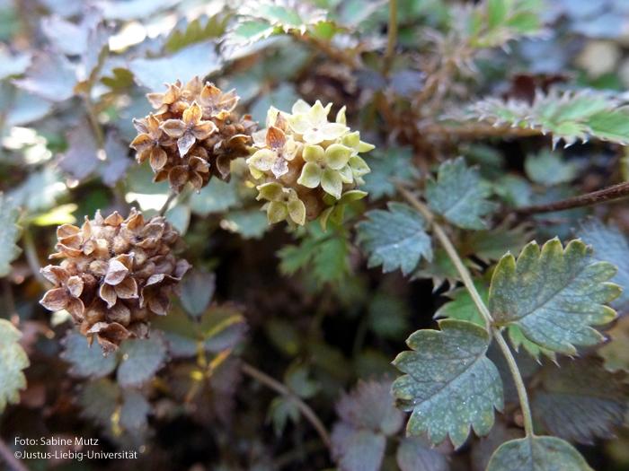 Blütenstand/September