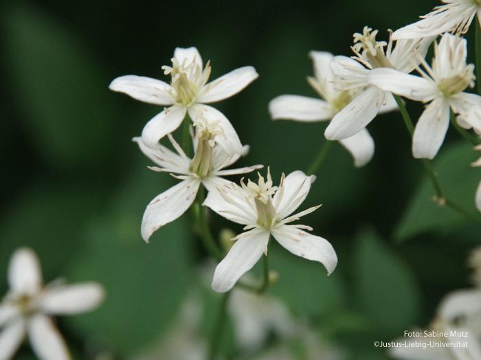Blüten/Juni