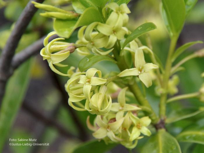 Blüten/Mai