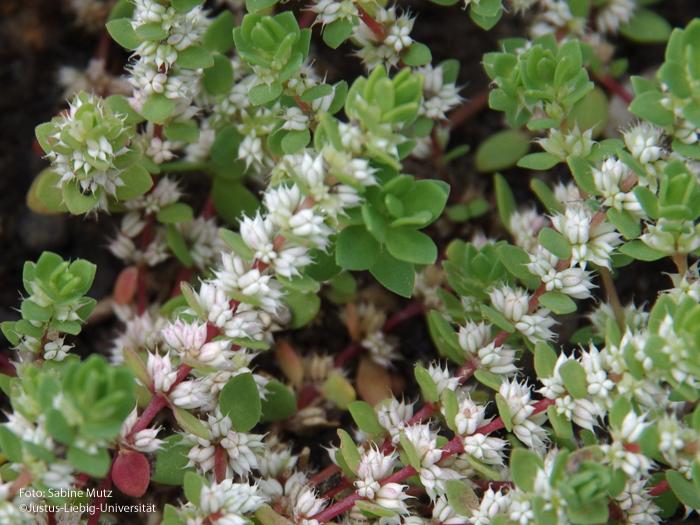 Blütenstände