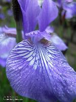 Blüte Detail/Mai