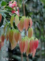 Blätter/April