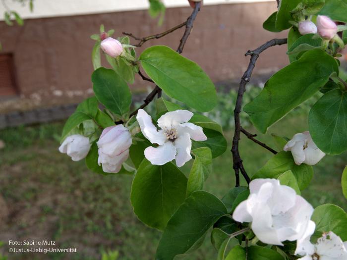 Blüte/April