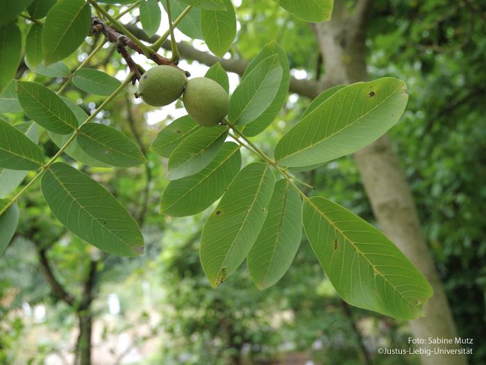 Blätter/September