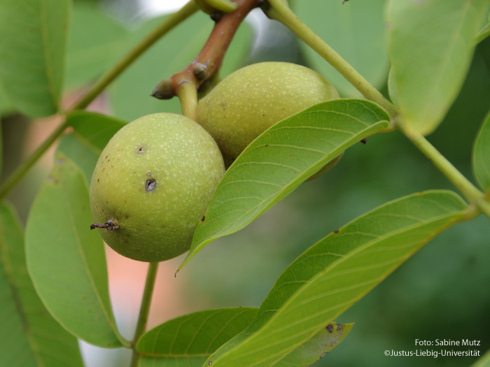 Früchte/September