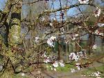 Zweige/März