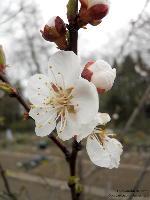 Blüte/März
