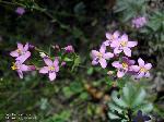 Blütenstand/Juli