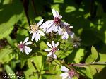 Blüten/August