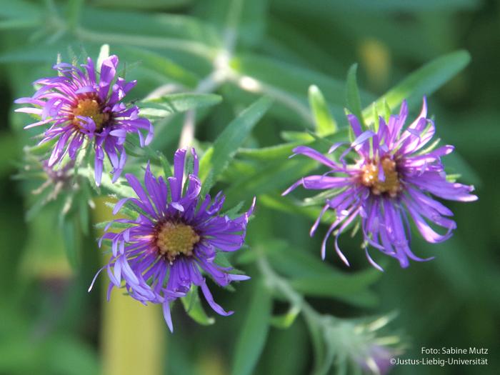 Blütenstand/Oktber