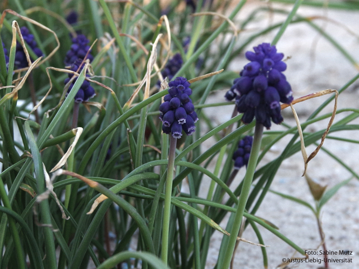 Blütenstand/April