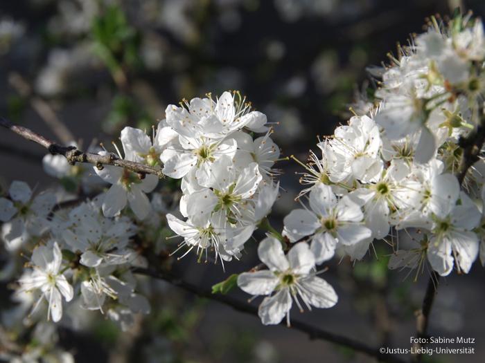 Blüten/April
