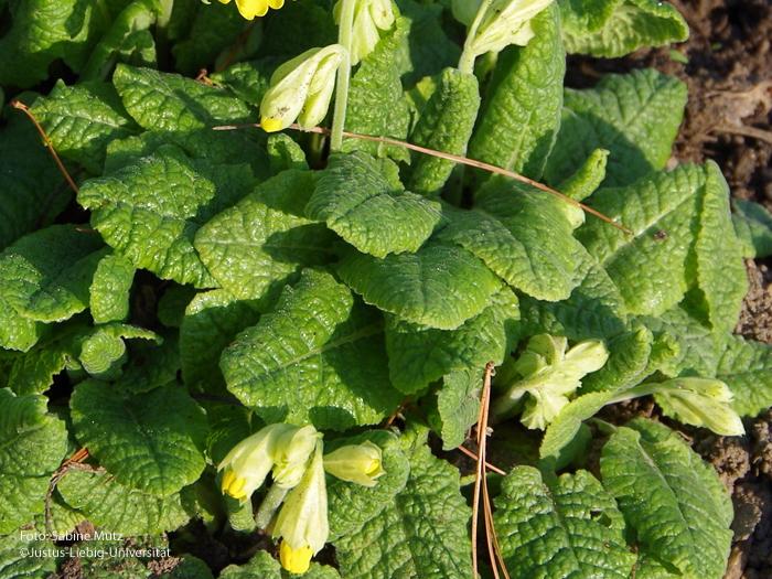 Blätter/März