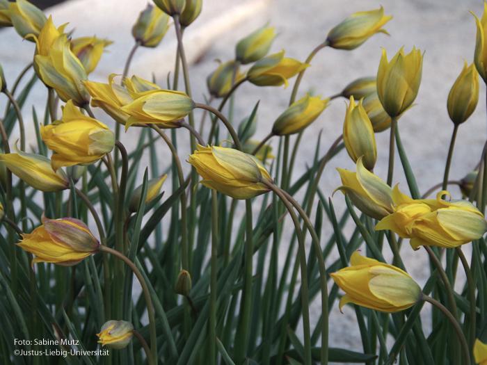 Blütenstände/April