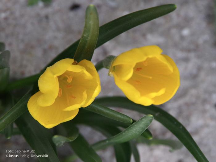 Blüten/Oktober