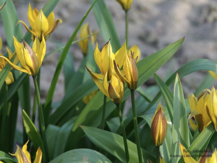 Blüten/März