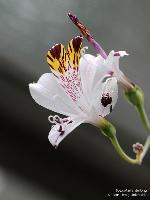 Blüte/Mai