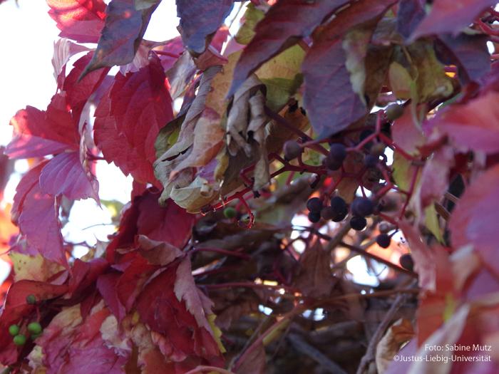 Früchte/November