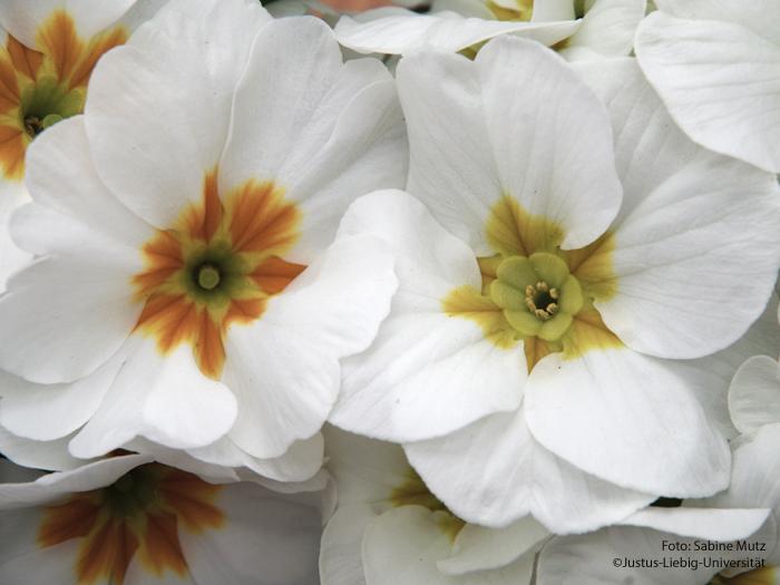 verschiedene Blütenformen